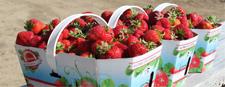 Summer in Quebec 2018 our inside stories Ferme Éthier - Les fruits soleil at St-Etienne-des-Gres en Mauricie