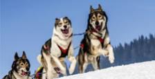 Québec en saisons Hiver 2018 forfait Tout plein d'activités hivernales!